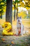 微笑的狗庆祝他的生日 免版税库存照片