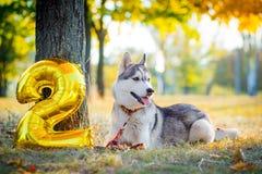 微笑的狗庆祝他的生日 库存图片