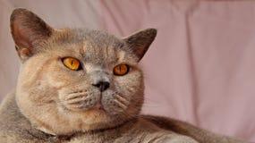 微笑的猫面孔 免版税库存图片