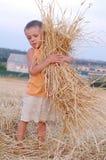 微笑的男孩收集麦子钉收获  愉快的小男孩获得乐趣在金黄领域 库存图片