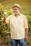 微笑的种葡萄并酿酒的人品尝酒在葡萄园里 免版税图库摄影