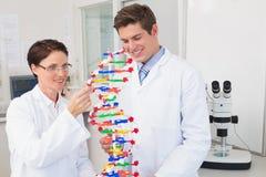 微笑的科学家殷勤地与脱氧核糖核酸模型一起使用 免版税库存图片