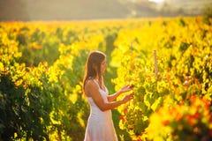 微笑的端庄的妇女本质上 喜悦和幸福 葡萄酒领域的平静的女性在日落 葡萄酒增长领域 农业游览 免版税库存照片