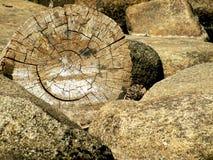 微笑的结构树 免版税库存照片
