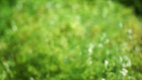 微观世界庭园花木 影视素材
