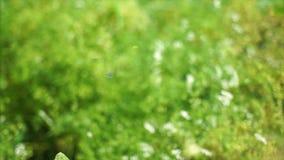 微观世界庭园花木 股票录像