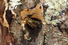 微观世界:在树的吠声的干燥结 免版税库存照片