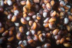 微观发芽的种子鸦片罂粟罂粟 由显微镜弄湿射击 麻醉,药物鸦片制剂和食用植物 图库摄影