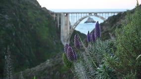 微风通过紫色Flowrs和Bixy桥梁 影视素材