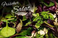 德国与混杂的绿色莴苣芝麻菜mesclun mache关闭的文本frischer Salat手段新鲜的沙拉健康食物膳食 图库摄影