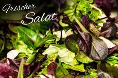 德国与混杂的绿色莴苣芝麻菜mesclun mache关闭的文本frischer Salat手段新鲜的沙拉健康食物膳食 免版税图库摄影