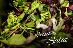 德国与混杂的绿色莴苣芝麻菜mesclun mache关闭的文本frischer Salat手段新鲜的沙拉健康食物膳食 免版税库存图片