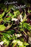 德国与混杂的绿色莴苣芝麻菜mesclun mache关闭的文本frischer Salat手段新鲜的沙拉健康食物膳食 库存照片
