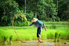 德国人在泰国种田 免版税库存图片