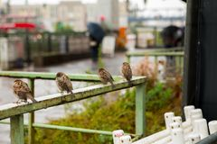 德国柏林,博物馆岛,秋天野生鸟, 库存图片