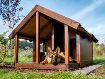 德国牧羊犬在它的狗窝 图库摄影