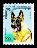 德国牧羊犬天狼犬座familiaris,狗serie,大约1996年 库存图片