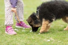 德国牧羊犬小狗和女孩 免版税库存图片