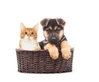 德国牧羊犬小狗和小猫在秸杆篮子 图库摄影