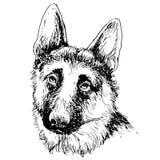 德国牧羊犬手拉的传染媒介 库存照片