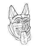 德国牧羊犬男性大顶头耳朵舌头非常突出  免版税图库摄影
