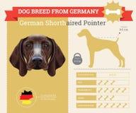 德国短毛指针狗品种infographics 向量例证
