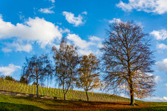 德国葡萄园和树在一美好的天 库存照片