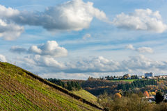 德国葡萄园在一美好的秋天天 免版税库存图片