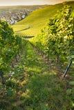 德国酒村庄有葡萄园的韦因斯塔特博伊特尔斯巴赫 库存照片