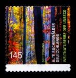 德国,联合国科教文组织世界遗产名录的老山毛榉森林选址serie,大约2014年 库存图片