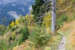 德国,巴伐利亚, Hinterstein谷 免版税库存图片