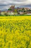 德国Mà ¼ nster德国春天Frà ¼ hling的风景城市施塔特莱茵莱茵河畔布赖萨上午莱茵 库存照片