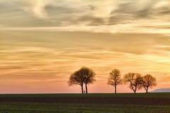 德国pfalz日落结构树步行者 免版税库存图片