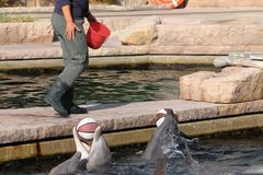 德尔芬在动物园里在德国在纽伦堡 免版税库存照片