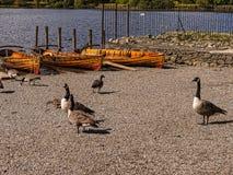 德文特湖在湖区在西北英格兰 库存图片