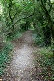 德文郡森林路径 库存照片