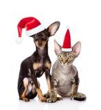 德文郡rex猫和一起坐在红色圣诞老人帽子的玩具狗小狗 在空白背景 免版税库存照片