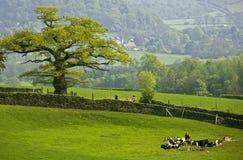 德贝郡地区英国国家公园峰顶 库存图片