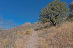 德里平斯普林斯自然地区,菲尔莫尔足迹 库存照片