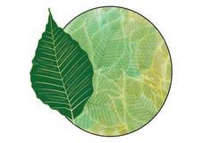 徽章绿色叶子 免版税图库摄影