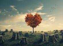心形的树在被清除的森林里 免版税库存图片