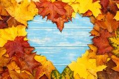 心形的秋天槭树在蓝色木背景离开 图库摄影
