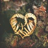 心形的蕨叶状体 库存图片