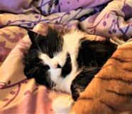 心爱的猫 免版税图库摄影