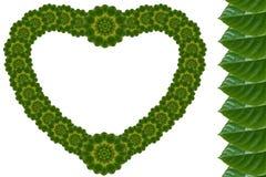 心脏创造性的花叶  库存照片