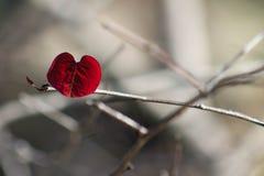 心脏叶子 库存照片