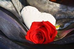 心脏和红色玫瑰,关闭 在红色玫瑰色华伦泰白色的概念重点 库存照片