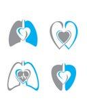 心脏和肺 库存照片