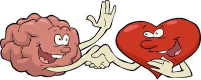 心脏和脑子 库存图片