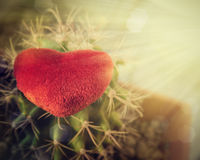 心脏和仙人掌在阳光下 免版税库存图片